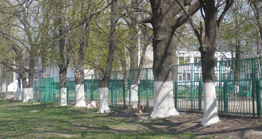 Білені дерева