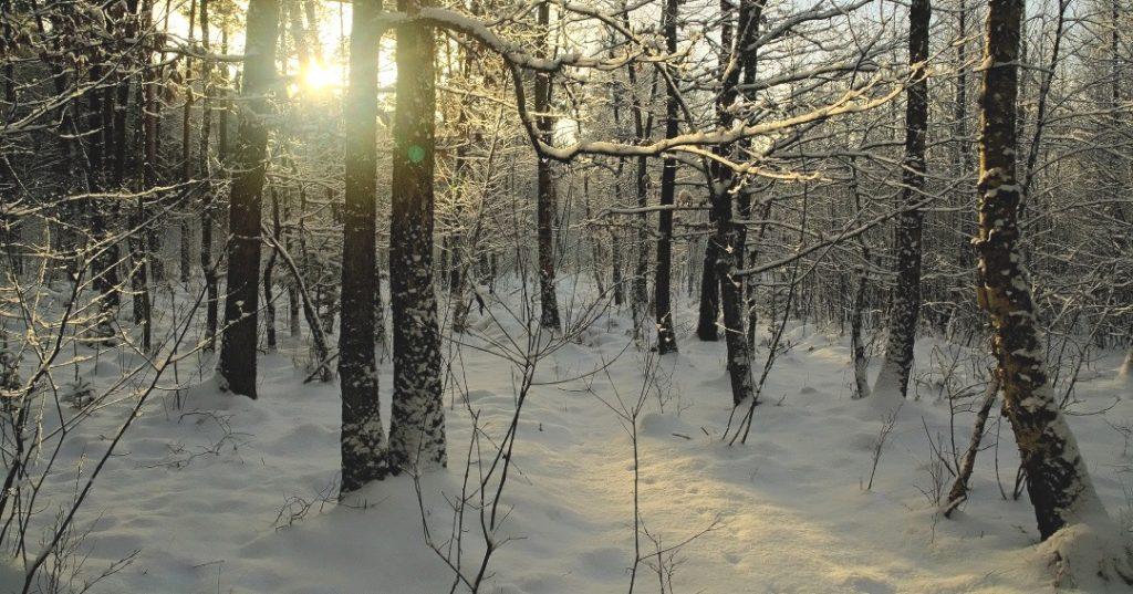 Дерева взимку